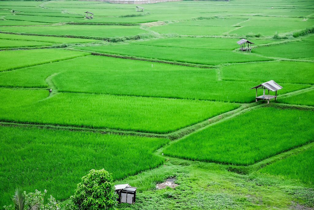 Nan is a historic city located in Northern Thailand bordering the country of Laos. Experience traditional Thai culture.
