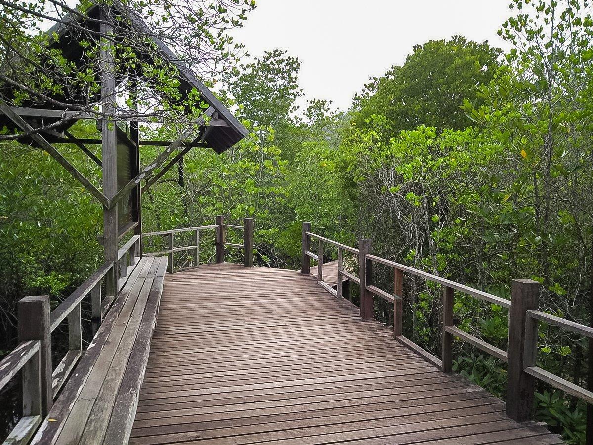 Wooden bridge in Mangrove forest at Kung Kraben Bay.