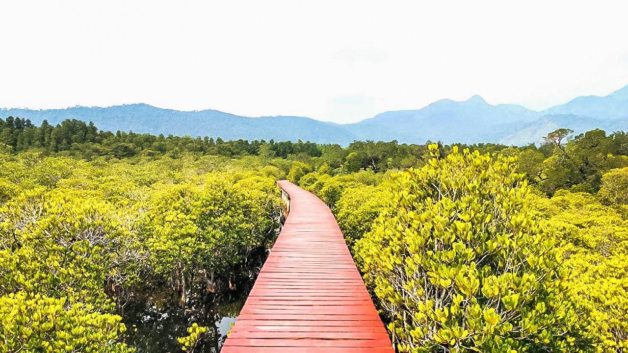 Salak Mangrove Forest with Red Bridge Walkway.